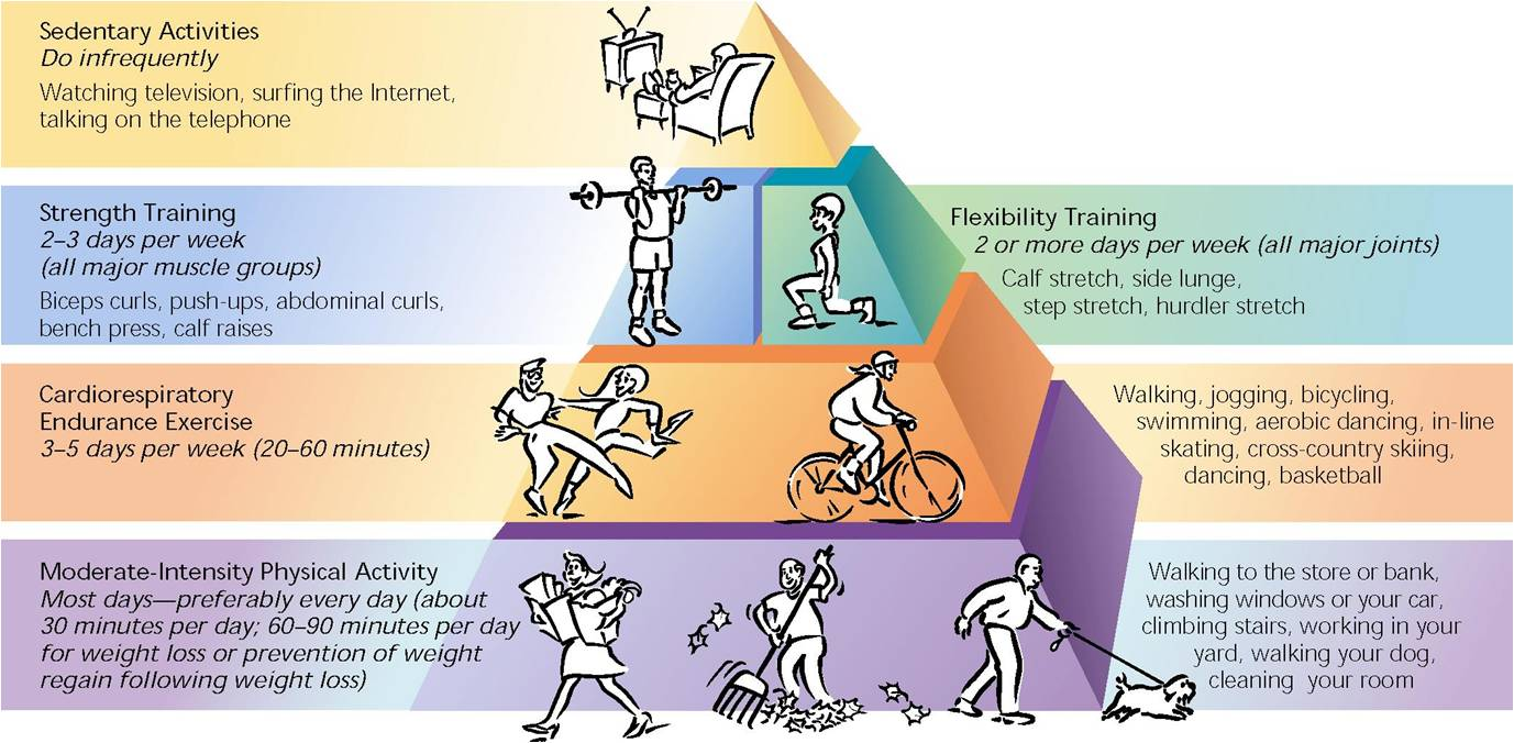 Pictures Of Components Of Physical Fitness And Examples